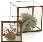 clarus-square-boxes