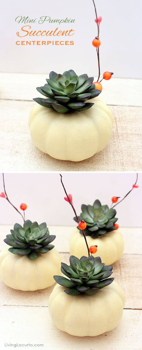 mini-pumpkin-succulent-thanksgiving-centerpieces